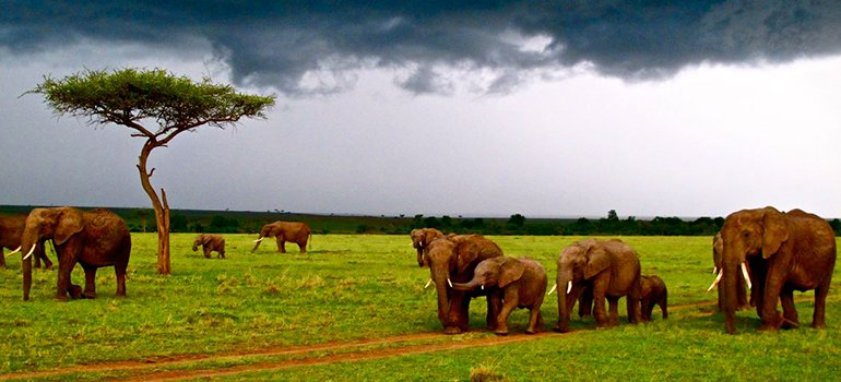 elephants resized